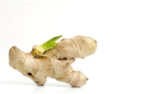 Cultiver Du Gingembre En Pot by Comment Cultiver Du Gingembre Chez Soi Jardinage