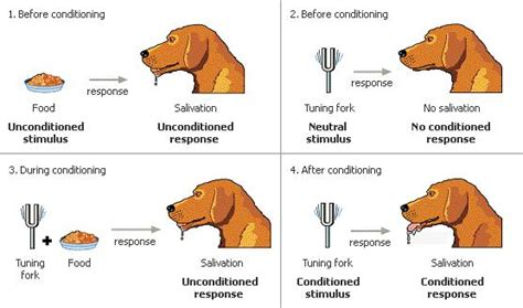 classical conditioning diagram learning classical conditioning operant conditioning