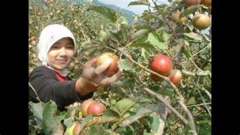 Make Up Gester Malang wisata petik apel malang tiket masuk kebun apel malang