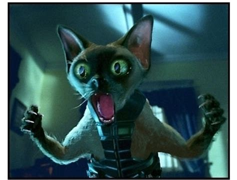 film blue russian cats dogs