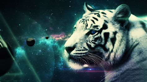 themes hd com wallpaper white tiger wallpapersafari