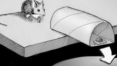 cara buat jebakan tikus sederhana buat jebakan tikus yang efektif dari gulungan tisu toilet
