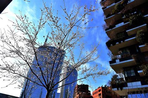 alberi in fiore a primavera alberi in fiore per le vie centro ha voglia di