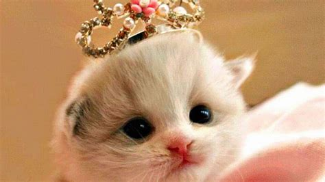 film kartun anak kucing devi rahayu september 2014