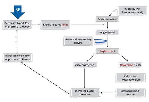 raas system flowchart raas system flowchart create a flowchart