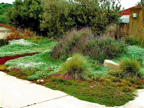 226 best images about groundcover ideas on - Lawn Alternativesdesign