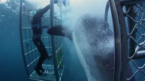 great white shark attacks cage 18 foot shark attacks cage great white killer youtube