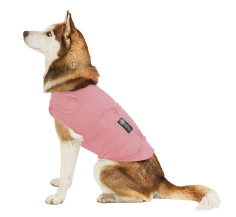 calming coat for dogs the akc calming coat calm cat october contest