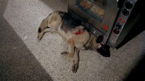 dead puppies aren t much dogs 1976 triskaidekafiles