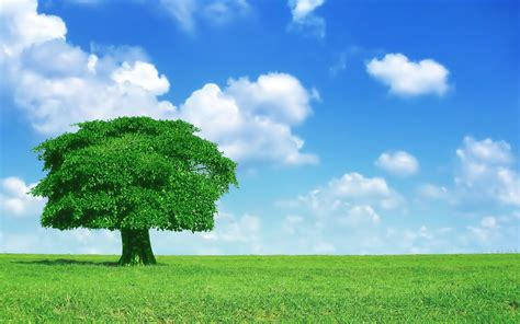 tree background hd photos tree hd wallpapers for pc 4193 amazing wallpaperz