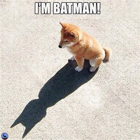 Meme Shiba Inu - i am batman meme corgy dogs pinterest batman meme