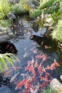 Simple Backyard Ponds Koi Fish Ponds On Pinterest Koi Ponds Koi And Ponds