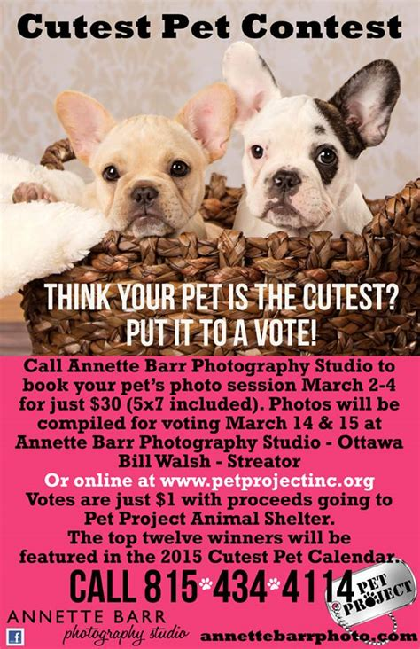 Pet Sweepstakes - photo shoots for cutest pet contest 2015 pet project