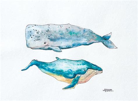 watercolor tattoo whale 17 best images about whales dolphin sharks on