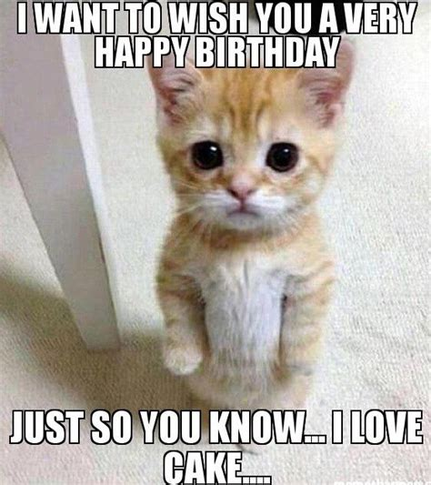 Funny Cat Birthday Meme - funny cat happy birthday memes trolls cat birthday memes