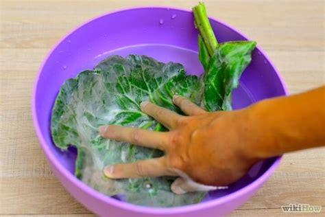 cucinare i cavoli come cucinare i cavoli comprare e utilizzare con