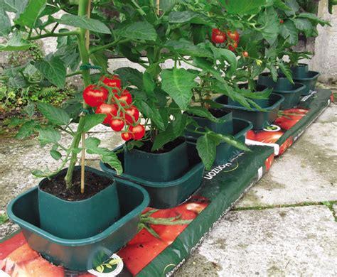 how to grow tomatoes the garden of eaden