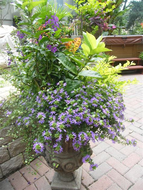 garden socks container gardening 68 best images about combo pots on tropical