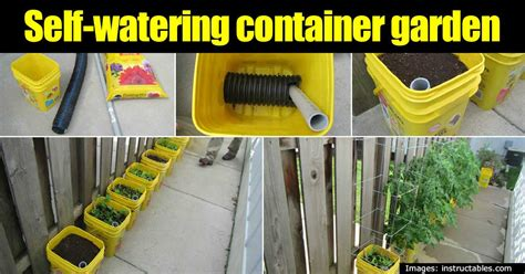 self watering making a self watering container garden maximize