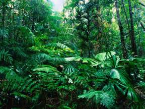 Plants In Tropical Rainforests - world visits tropical rainforests green plants on the earth