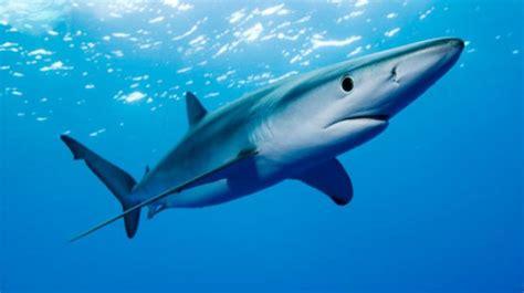 imagenes de tiburones wallpaper mitos sobre los tiburones