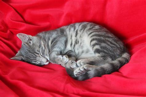 katze zittert beim schlafen wie viel arbeit macht eine katze schlafen katzen den