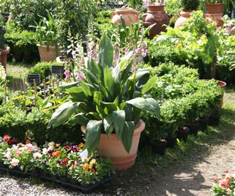 di masino fiori giardinaggio fiori in mostra a masino