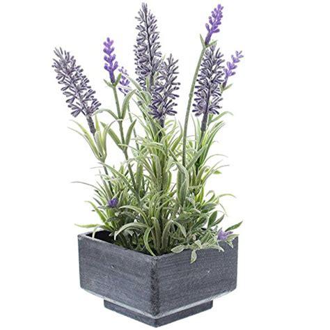 lavendel als zimmerpflanze zimmer kunstpflanzen und andere wohnaccessoires
