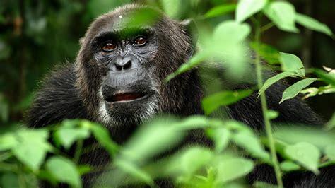 monkey hd backgrounds pixelstalknet