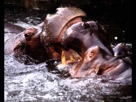 imagenes de animales carniboros carnivoros herbivoros y omnivoros by magali youtube