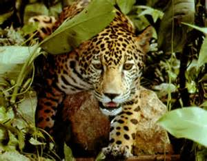 Rainforest learning about rainforests animals of the rainforests bbc