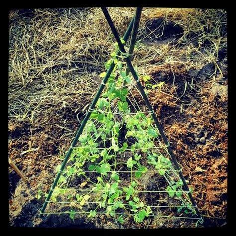trellis for climbing plants diy trellis for climbing plants secret garden