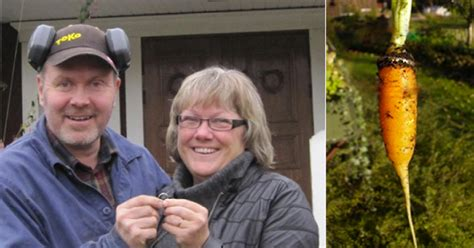 Wedding Ring In Carrot by Retiree Incredibly Finds Lost Wedding Band In A Carrot
