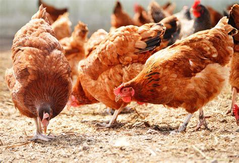 produzione alimenti per animali lavorazione cibo per animali pompe per alimenti www pcm eu