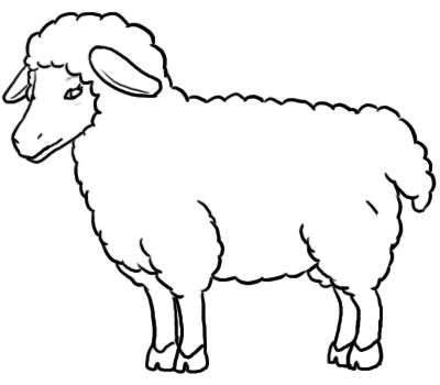 template of sheep sheep line drawing clipart best