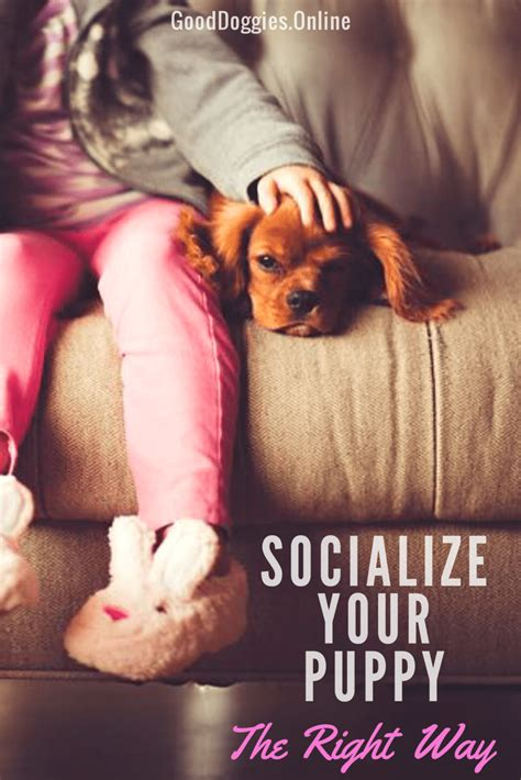 how to socialize an aggressive socializing your puppy the right way doggies