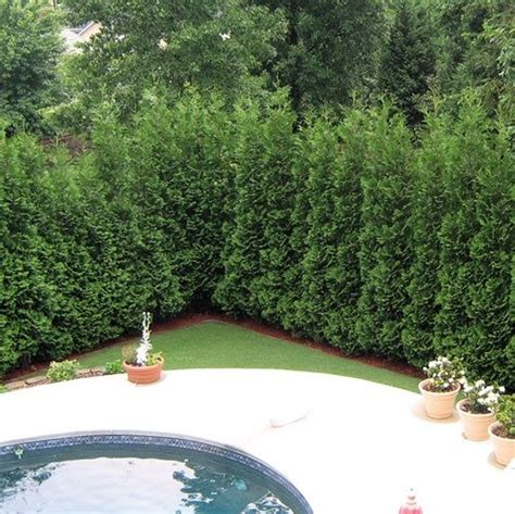Backyard Trees For Privacy by 13 Attractive Ways To Add Privacy To Your Yard Deck With Pictures