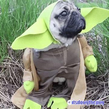 wars pug costumes wars pug costume gifs pug jokes