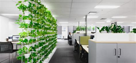 plants for the office office plants archives ambius australia blogambius