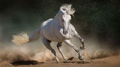 imagenes romanticas con caballos por qu 233 los caballos y sus primos son los 250 nicos