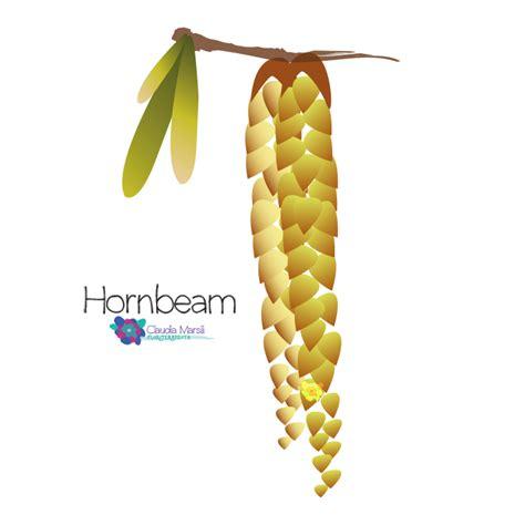 fiori di bach hornbeam hornbeam marsili floriterapeuta