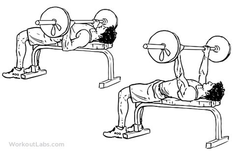 flat bench press barbell barbell bench press chest press illustrated exercise