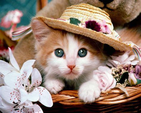 beautiful kittens beautifull cat cats wallpaper 14749908 fanpop