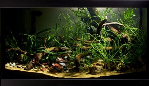 set   african biotope aquarium practical