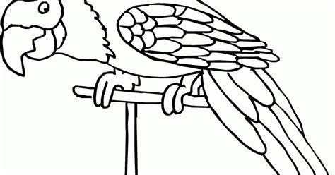 mewarnai gambar burung beo contoh anak paud