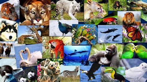 imagenes de animales endemicos animales