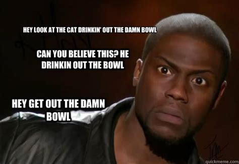 Kevin Hart Text Meme - hey look at the cat drinkin out the damn bowl can you
