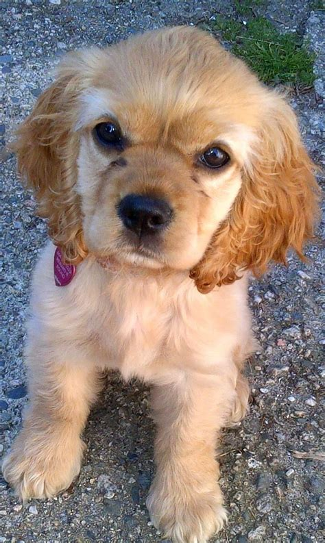 cheapest puppy breeds top 10 cheapest breeds breeds picture