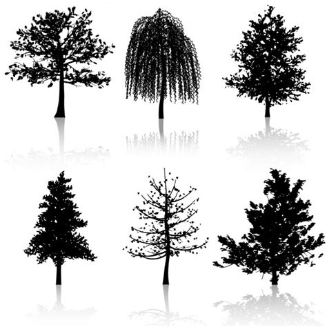 imagenes blanco y negro gratis ramas de arboles blanco y negro fotos y vectores gratis