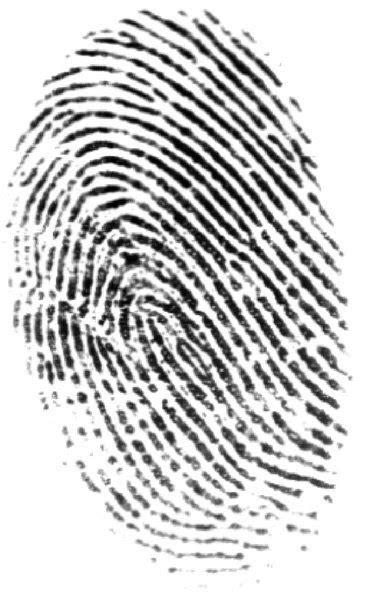Criminalística y más: Dactilóscopia